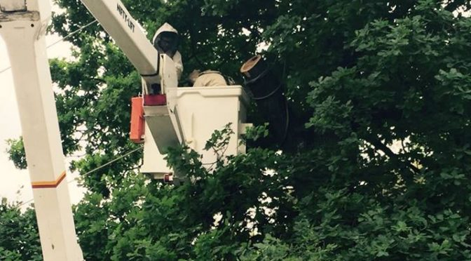 We work with Councils, Parks Vic, Asset Managers, Landlords and tenants etc to safely and humanely remove and rescue bee hives from trees, homes and buildings across Melbourne.